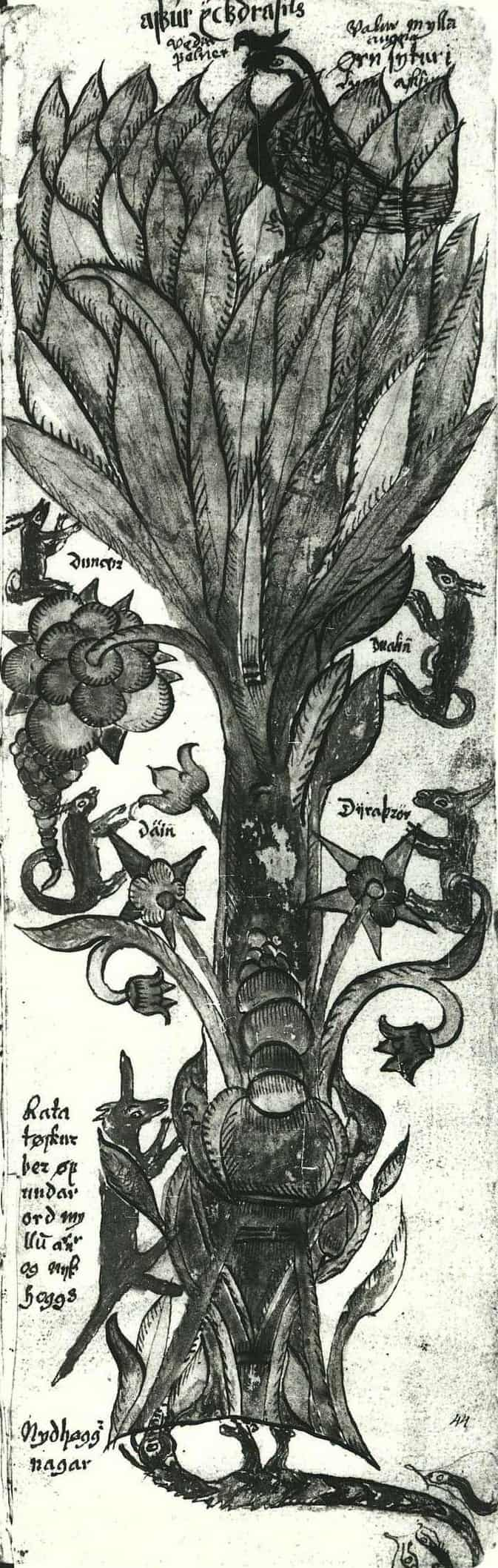 An illustration of the Norse world tree Yggdrasill, from an Icelandic 17th century manuscript.