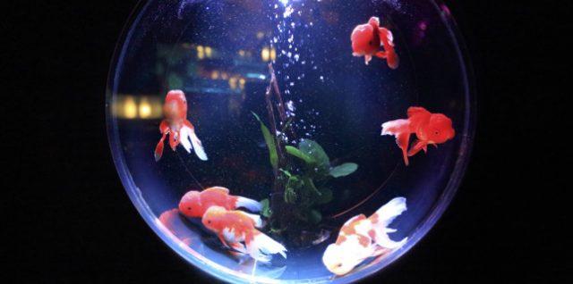 """Visualisieren und Präsentieren im """"Goldfischglas"""""""