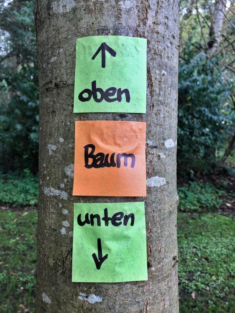 Post-it Extreme auf feuchter Baumrinde im norddeutschen November